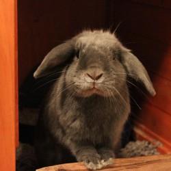 Kaninchen im Stall - von Daniel Redmond