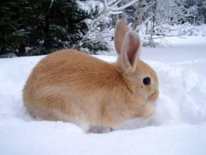 Kaninchen im Winter